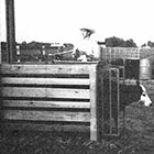 Spring Loaded Gate for Calf Roping Chute